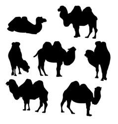set camels vector image