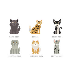 Collection different cats breeds maine coon vector