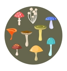 different types mushrooms set vector image