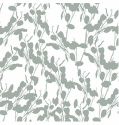 eucalyptus silver dollar tree foliage natural vector image