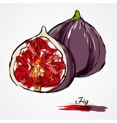 Fig fruit vector