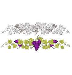 grapevine with grapes hand drawn sketch and vector image