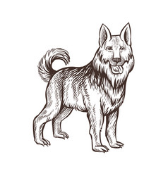 Guard dog farm animal sketch isolated dog on the vector