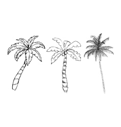Palm trees on white background vector image