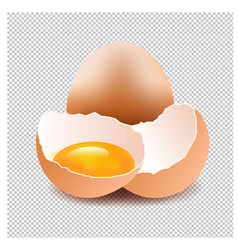 eggs with isolated background vector image