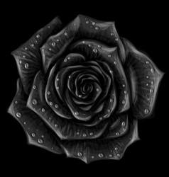 black rose artistic monochromeblack rose vector image
