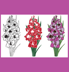 Bouquet of flowers gladiolus vector