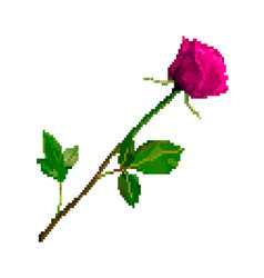 pixel art rose flower isolated on white background vector image