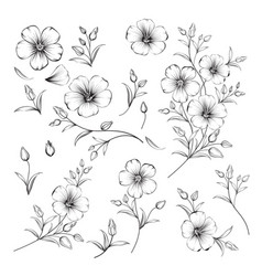 set linum flower elements collection flax vector image