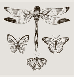 set of butterflies and dragonfly in the vector image