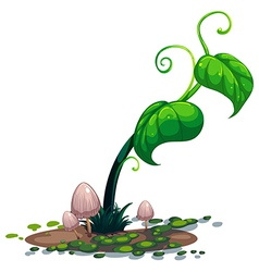 A growing green plant vector image