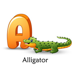 Letter a is for alligator cartoon alphabet vector