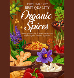 organic seasonings and spices vector image