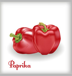 red sweet bulgarian bell pepper vector image