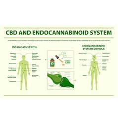 Cbd and endocannabinoid system horizontal vector