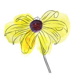 Drawing flower of rudbeckia vector