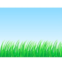 Lush grass vector image