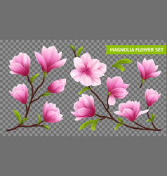 Realistic magnolia flower transparent icon set vector