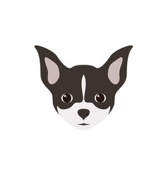 portrait of chihuahua puppy simple dog vector image