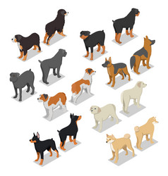 isometric dog breeds with rottweiler retriever vector image vector image