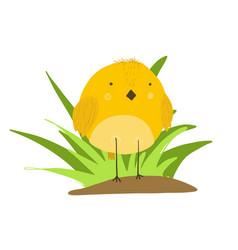 cute cartoon yellow chicken in grass vector image