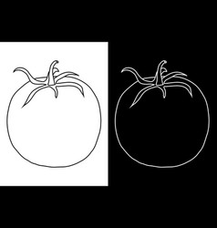 Tomato doodle vector
