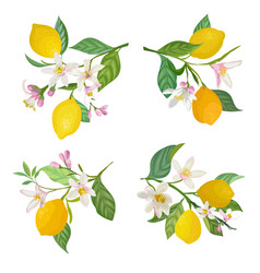 watercolor lemons branch with leaves and flowers vector image