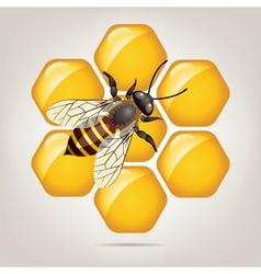 Bee on honeycells vector