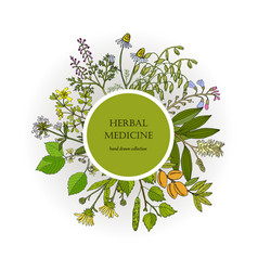 different medicinal plants collection vector image