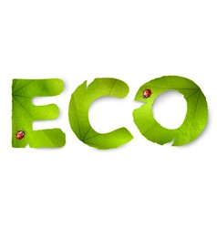 eco word made from green leaves vector image