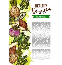 exotic natural vegetables sketch banner vector image