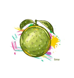 Lime with colorful splashes vector