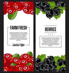 Organic farm fresh berry flyer set vector