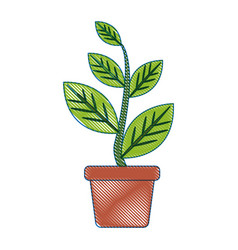 potted plant natural decoration interior image vector image