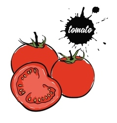vegetables red tomato vector image vector image