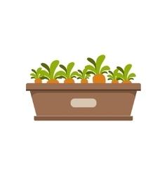Carrots growing in crate vector