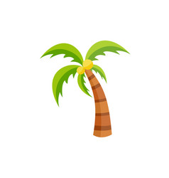 flat palm tree with coconut icon isolated vector image