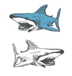 shark cartoon hand drawn eps8 vector image