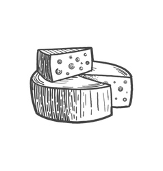 Cheese engraving style vector image vector image
