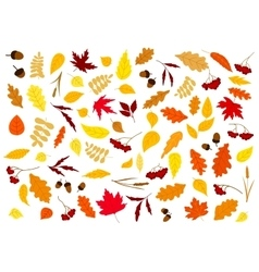 Autumn leaves herbs berries and acorns vector image
