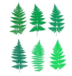 Set of fern frond silhouettes vector image