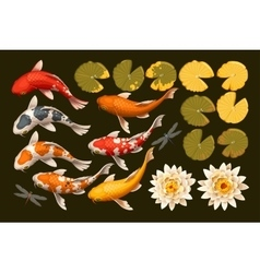 Set of koi fish and lotus vector image