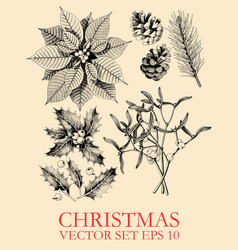set with hand drawn christmas plants vector image