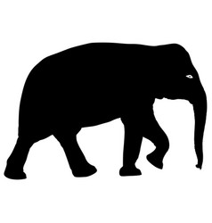 silhouette large african elephant on a white vector image