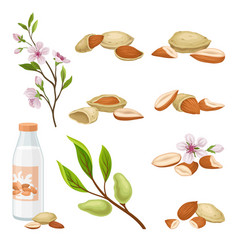 almonds plant and nuts in shell set vector image