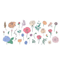 collection of hand drawn garden flowers leaves vector image