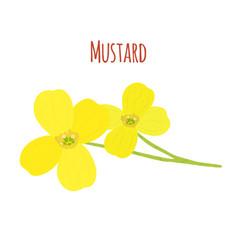 mustard flowerorganic condimentflat style vector image