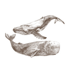 Set of graphical hand painted whale isolated on vector