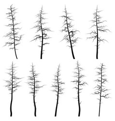 silhouettes of old trees without leaves deadwood vector image