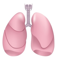 Healthy human lungs Respiratory system Lung vector